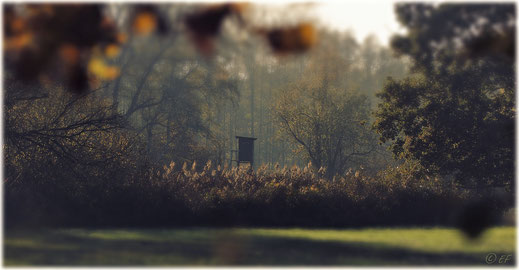 Ein Hochsitz im Herbst