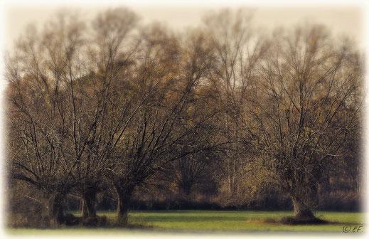 Kopfweiden im Herbstlook