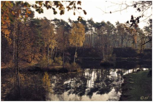 Herbst am Anglerteich