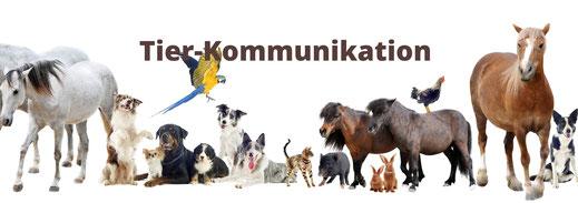 Mediale Ausbildungen in Reinach, BL oder online Ausbildungen, Trance-Healing Ausbildung, Tierkommunikation und sensitiv/mediale Berater/in