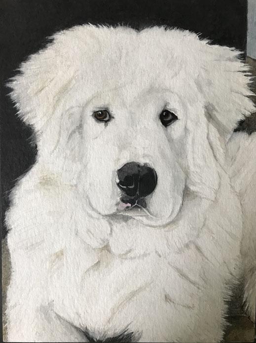 Hund, Dog, Tier_Porträt, Animal_Portrait, handgezeichnet, handdrawn
