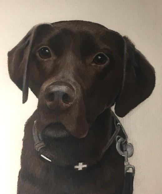 Hund, Dog, Tier_Porträt, Animal_Portrait, handgezeichnet