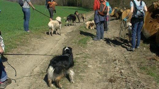 Balade canine - plusieurs humains avec leurs chiens en longe sur un chemin en Combe de Savoie