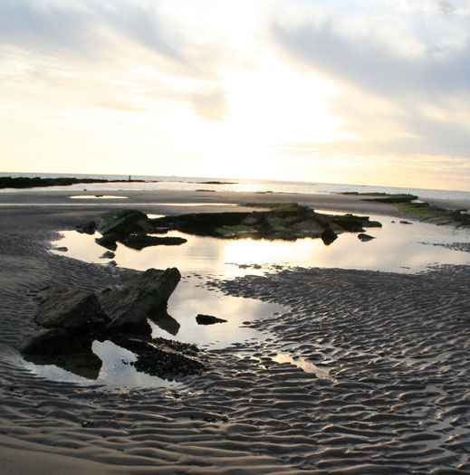 Promenade en Baie de Somme