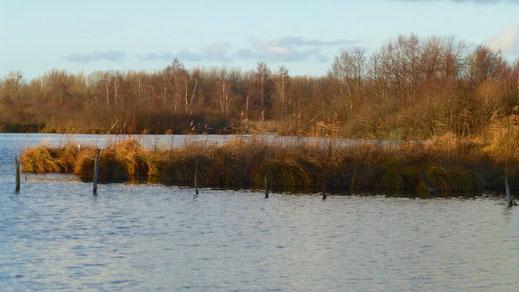 Les étangs de Mareuil-Caubert