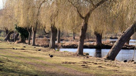 Parc de la Bouvaque – Abbeville