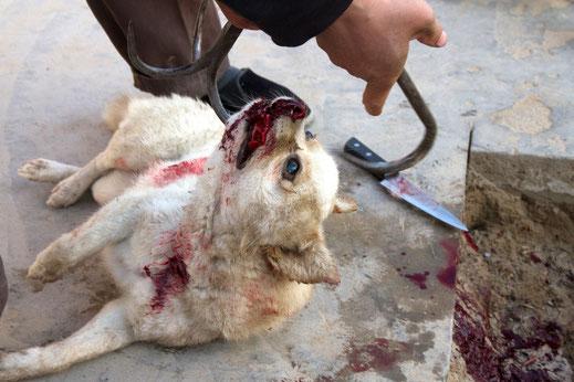 Niemand Will Ein Opfer Sein Auch Tiere Nicht