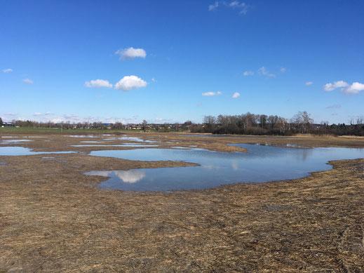 Neu gestaltete Fläche beim Greifensee (Bild: Dany Kreiner, Festland)