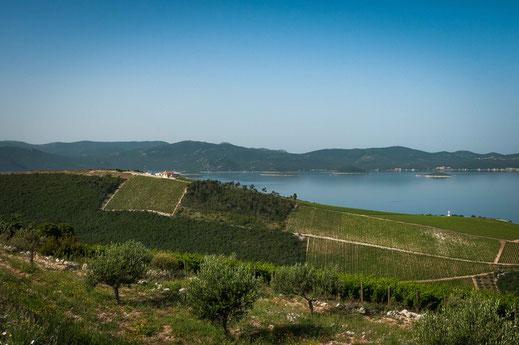 Weinanbau in Kroatien mit Blick auf das Meer