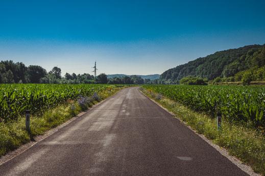 Landstraße durch die Österreichische Natur und Maisfelder am Rande der Straße