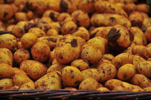 Anabelle Kartoffeln im Korb Bio Speisekartoffeln vom Bauer