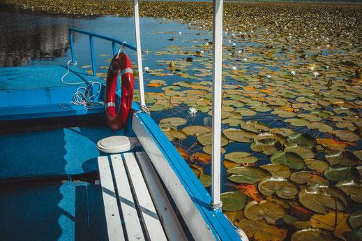 Mit dem Boot durch den dichten Jungle von Seerosen auf dem Wasser