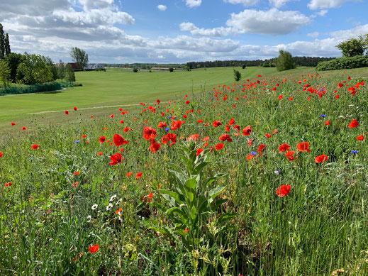 Golfpark Balmer See_Driving Range 1_ 052019 Photo © Peter Schmidt