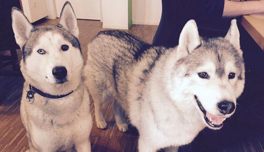 Unsere Agenturhunde: Rajko und Chinuk (von links)