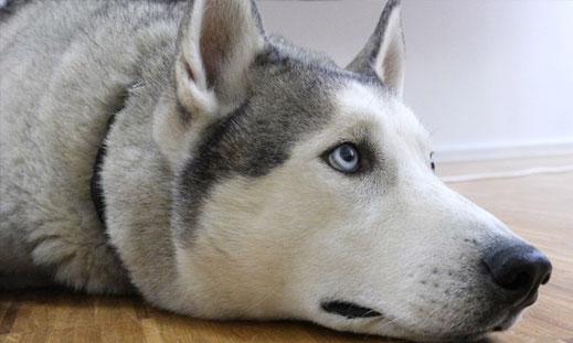 RIP! Unser Bürohund Rajko.