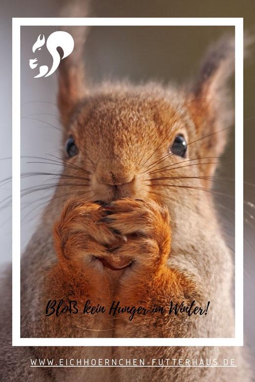 Eichhörnchen auf einer Wiese sucht Nahrung: Photo by Joakim Honkasalo on Unsplash