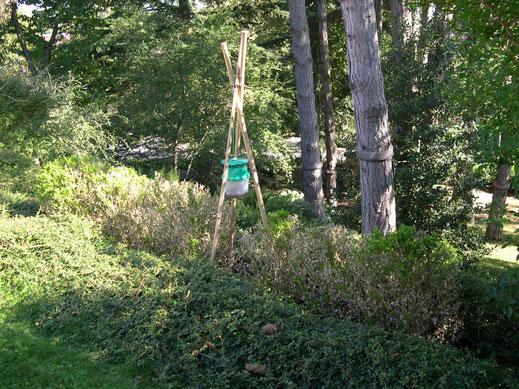 sylva-jardins-paysages.fr-piège à phéromones contre la pyrale du Buis 2014