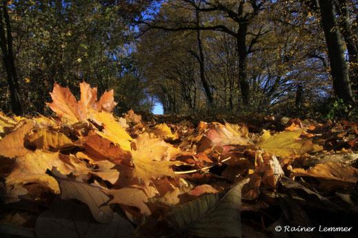 Herbstlaub im Westerwald