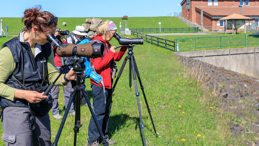 Reisegruppe von shorebirder.ch unterwegs auf Nordstrand