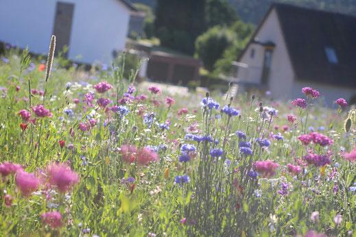 Blühende Landschaft in Niedersayn im Westerwald