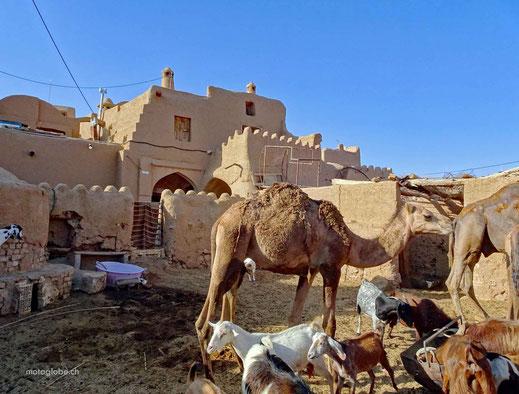 Das Bewachungskomitee des Guesthauses in Garmeh