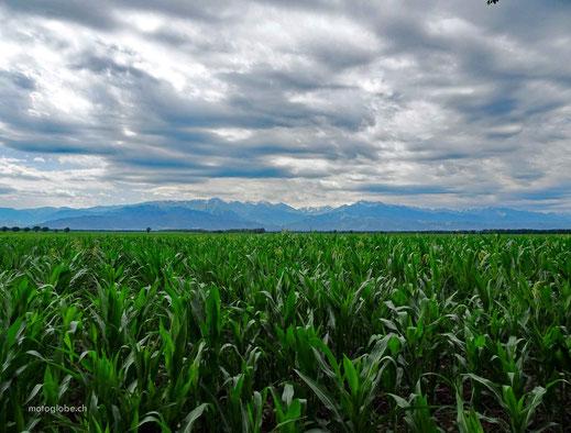 Um Almaty herum gibt es viel Landwirtschaft