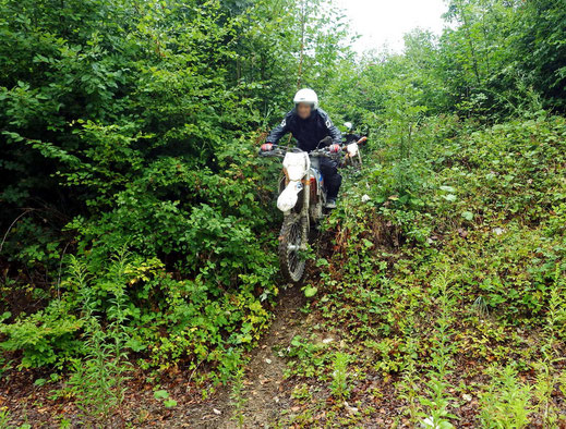 Motorradreisen Motorcrossmaschine im Wald, fährt den Berg runter