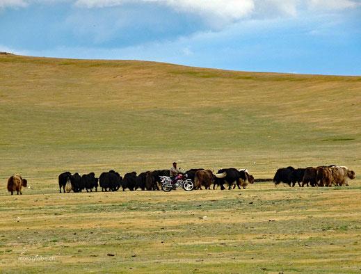 Mongolischer Yakboy