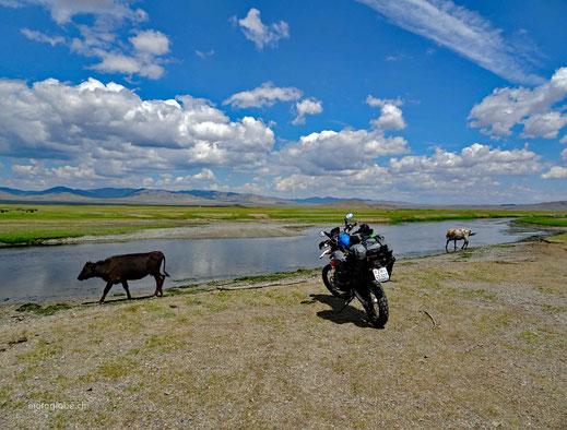 Fluss, Rinder, Motorrad, grüne Wiesen, Berge, blauer Himmel und weisse Wolken
