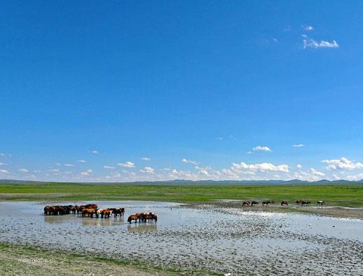 Pferde stehen im Wasser, Wasser, grüne Wiesen, blauer Himmel, weisse Wolken