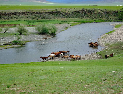 Alle Herdern können sich frei bewegen