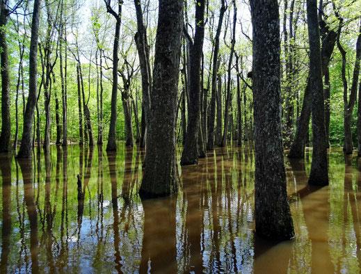 Motoglobe_Motorradreisen. Es stehen unzählige Bäume im Wasser und spiegeln sich im Wasser.