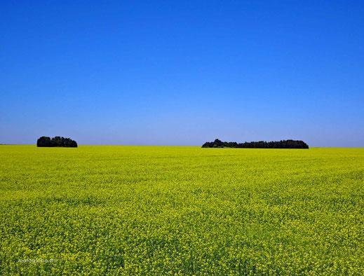 Einer dieser riesigen Anbaufelder