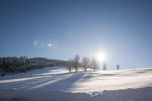 Das Winterwunderland rund um Werfenweng lädt zu ausgiebigen Spaziergängen ein.  Foto: djd/www.werfenweng.eu/Bethel Fath