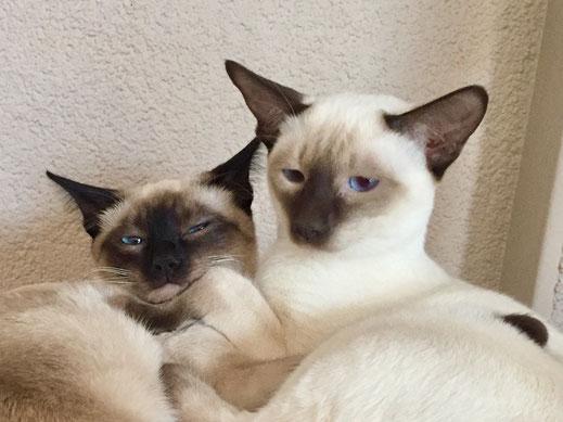 Frupsi & Jamila