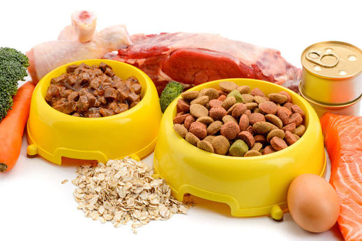 Trockenfutter Nassfutter selber kochen Futtermittelunverträglichkeit Hund Katze