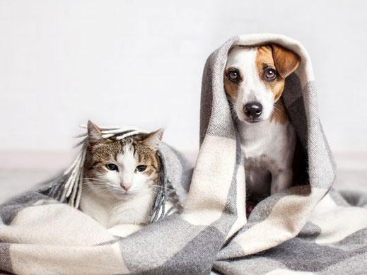 Uta Wilmer tierärztliche Ernährungsberatung Futtermittelunverträglichkeit Hund Katze