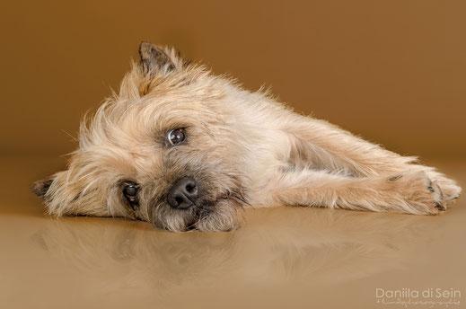 Hundefotografie Indoor, Studio - Daniila di Sein, Zürcher Oberland