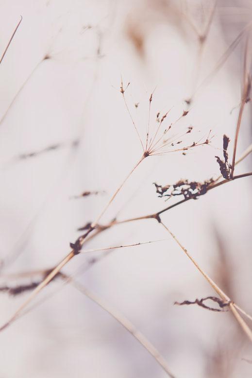 Kath Visual, Blog, Sprache Deiner Seele, Energie, Gestaltung, Design, Wahrnehmung, Natur, Winter, Ast, Schnee