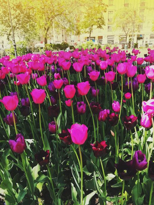 Tulpen, Blumen, Kreativität, Katharina Steiner, Wien, Kath Visual