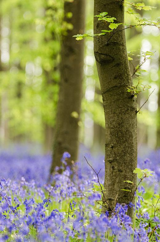 Einfallendes Streiflicht erhellt den Waldboden.
