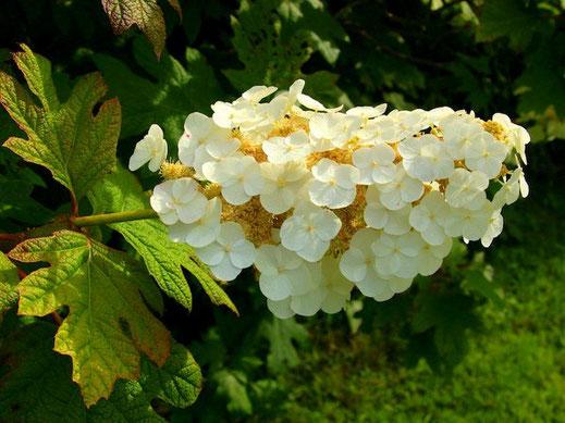 Visitez les beaux jardins dans le pays de Fougères