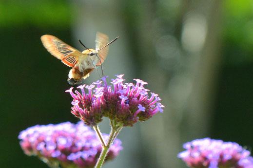 Visite guidée dans un jardin d'exception, aux Jardins de la Pérouse du Mitan