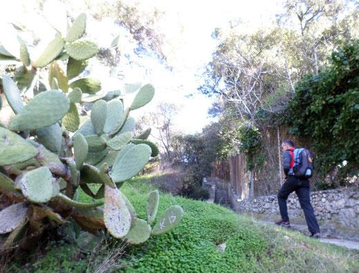 On quitte le sentier au niveau de ces cactus géants