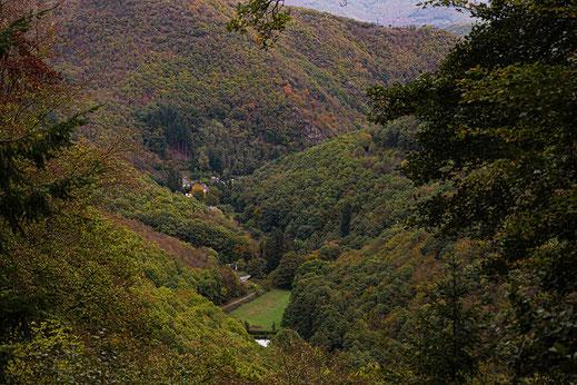 Landschaft in der Eifel-Blick auf Wald und Bäume von oben