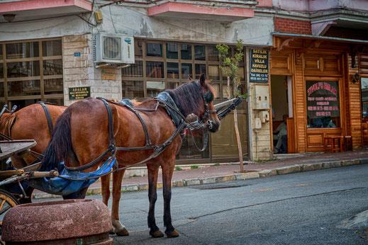 Pferdekutsche auf der Prinzeninsel Büyükada-Istanbul