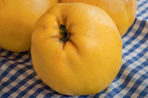 Gelbe Quitten-ganze Früchte auf blau-weiss karierter Tischdecke -Bilder kostenlos bei www.mjpics.de