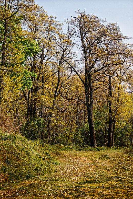 Wald-Spazierweg im Frühling © Jutta M. Jenning