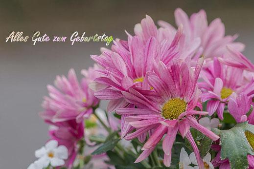 Alles Gute zum Geburtstag-Grusskarte Rosa Chrysanthemen