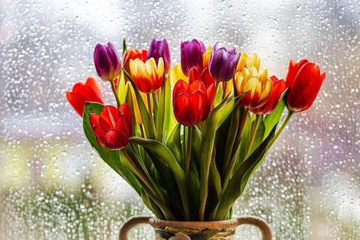 Bunte Tulpen am Fenster mit Regentropfen © Jutta M. Jenning ♦ www.mjpics.de